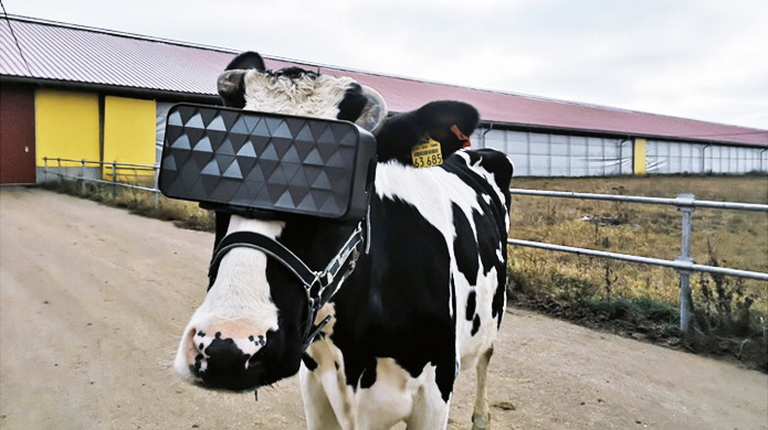 корова в VR